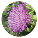 7-BOOMBA-ENZYME-Milk-Thistle
