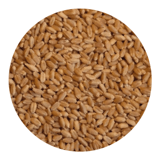 Wheat Fibre